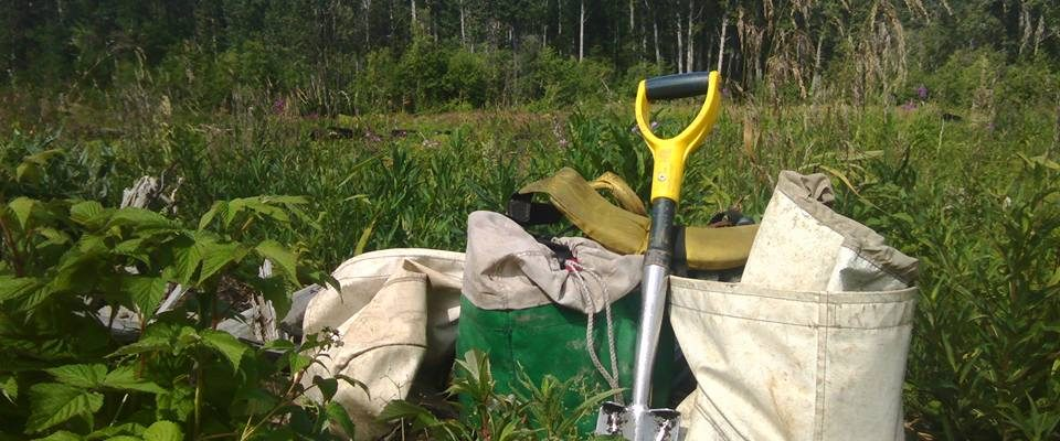The Tree-planting Experience. Plantando Arboles En Canada.